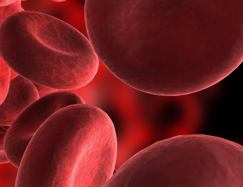 bio red blood cell journey Journey of the blood blood begins its journey in the arteries as pure oxygenated blood and flows.